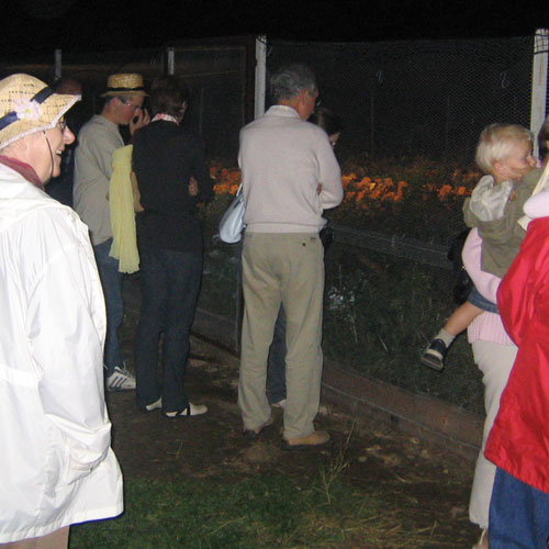 Nocturnal visit of the snails farm